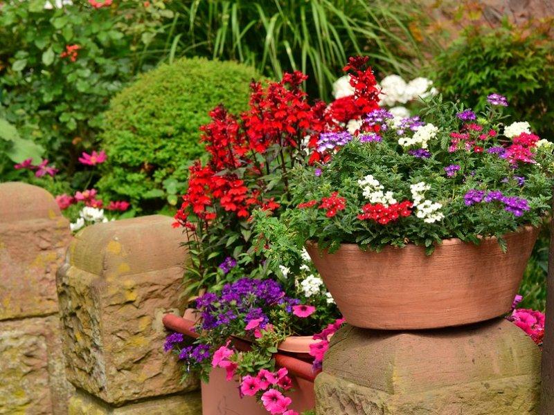 cvijeće u tegli