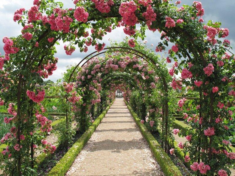 ruže u vrtu