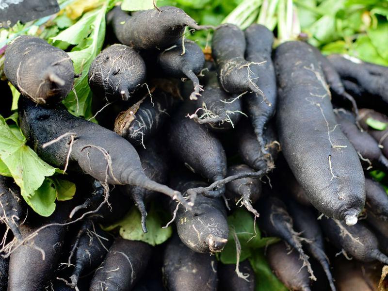crni korijen