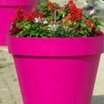 cvijeće u žardinjeri