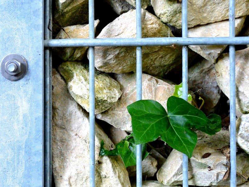 gabion ograda