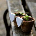 sadnice biljaka