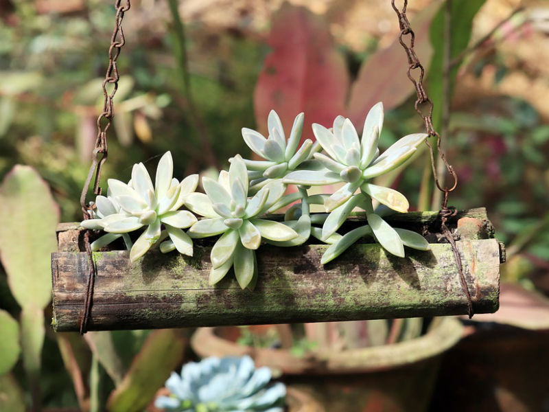 viseća tegla za cvijeće