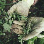 vrtlarstvo