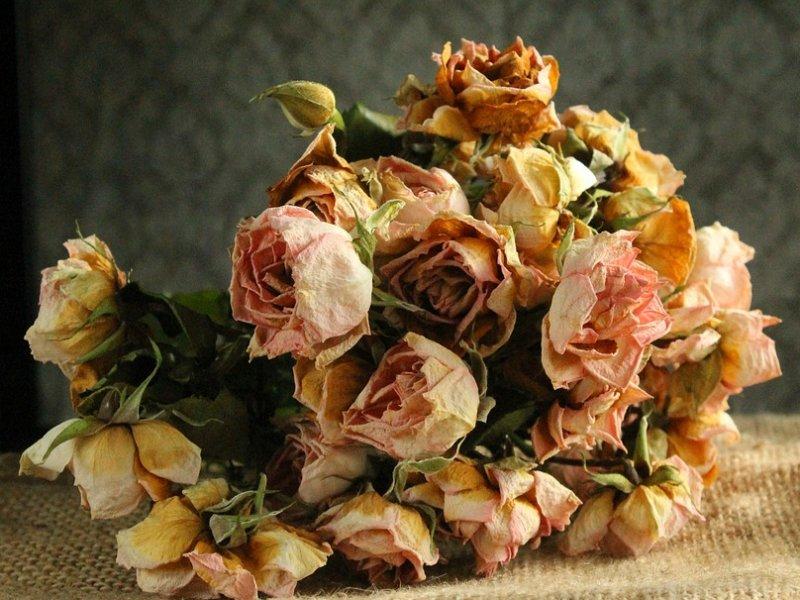 sušenje cvijeća