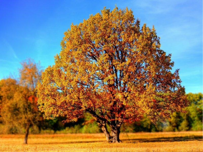 drvo na livadi