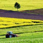 polje-uljane-repice