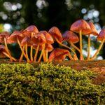 Gljive na stablu