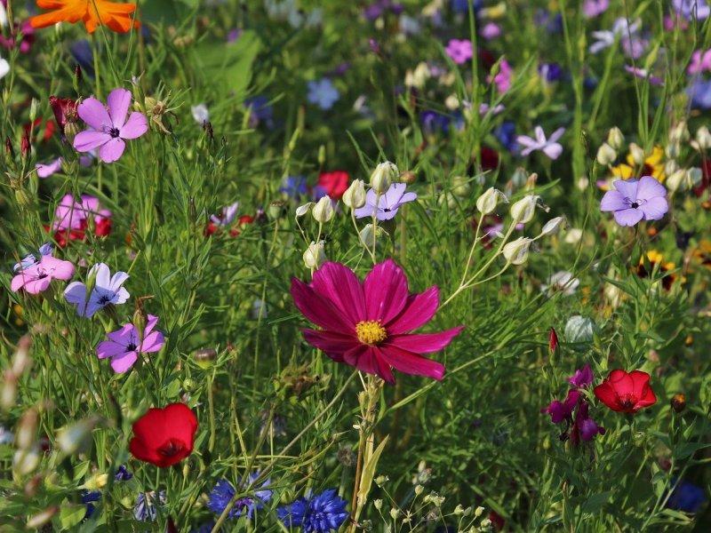 samoniklo cvijeće