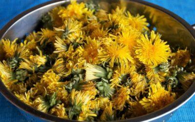 priprema meda od maslačka